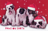 Paws on Earth Puppies Christmas Card