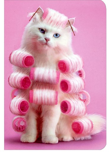 Cat in Curlers Avanti Journal