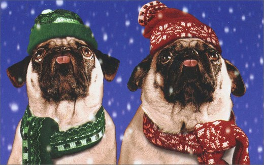 Pugs In Snow (1 mini gift card holder/1 envelope) Avanti Christmas Gift Card Holder  INSIDE: Happy Holidays!