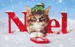 Noel Kitten (1 mini gift card holder/1 envelope) Avanti Christmas Gift Card Holder - FRONT: Noel  INSIDE: Wishing you a Merry Christmas