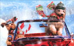 Dogs Driving Convertible (1 mini gift card holder/1 envelope) Avanti Christmas Gift Card Holder  INSIDE: Happy Holidays are headed your way!