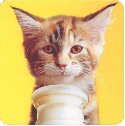 Got Milk Kitten (1 square gift card holder/1 envelope) Avanti Square Gift Card Holder - FRONT: No Text  INSIDE: Because you're so sweet!