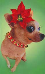Chihuahua With Poinsettia (10 mini blank cards/12 envelopes) Avanti Mini Blank Boxed Christmas Gift Enclosure Cards  INSIDE: Blank Inside