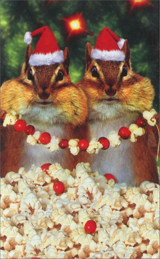 Chipmunks In Front Of Tree (10 mini blank cards/12 envelopes) Avanti Mini Blank Boxed Christmas Gift Enclosure Cards  INSIDE: Blank Inside