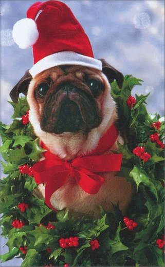 Pug In Wreath (10 mini blank cards/12 envelopes) Avanti Mini Blank Boxed Christmas Gift Enclosure Cards  INSIDE: Blank Inside
