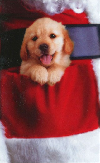 Puppy In Pocket (10 mini blank cards/12 envelopes) Avanti Mini Blank Boxed Christmas Gift Enclosure Cards  INSIDE: Blank Inside