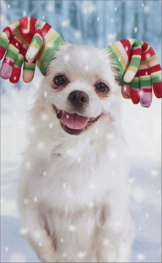 Dog With Gloved Ears (1 mini blank card/1 envelope) - Christmas Gift Enclosure Card  INSIDE: Blank Inside