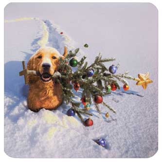 Dog with Tree In Snow (1 square gift card holder/1 envelope) - Christmas Gift Card Holder  INSIDE: Merry Christmas!
