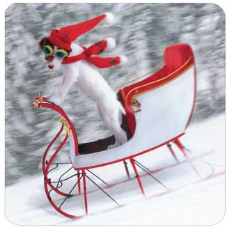 Dog On Sleigh (1 square gift card holder/1 envelope) Avanti Christmas Gift Card Holder  INSIDE: Merry Christmas!