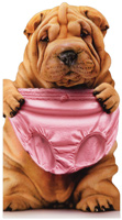 Sharpei Holding Pink Underwear (1 oversized card/1 envelope) - Birthday Card  INSIDE: At our age, thongs are not an option! Happy Birthday