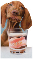 Denture Dog (1 oversized card/1 envelope) - Birthday Card  INSIDE: Happy Birthday Thexy!