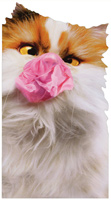 Cat With Bubblegum (1 oversized card/1 envelope) - Birthday Card  INSIDE: Party 'til you pop! Happy Birthday