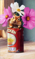 Chipmunk In Chicken Soup Can (1 mini blank card/1 envelope) - Gift Enclosure Card