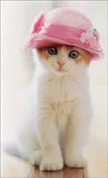Cat Wears Pillbox Hat (1 mini blank card/1 envelope) - Gift Enclosure Card