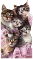 Group Of Kittens (1 oversized card/1 envelope) - Birthday Card  INSIDE: Hugs and kittens! Happy Birthday