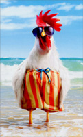 Hen Wears Swimsuit (1 mini blank card/1 envelope) Avanti Mini Blank Funny Gift Enclosure Card