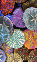 Colorful Sand Dollars (1 mini blank card/1 envelope) - Gift Enclosure Card
