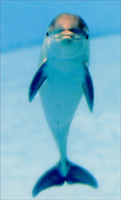 Baby Dolphin (1 mini blank card/1 envelope) - Gift Enclosure Card