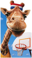 Giraffe Wears Sweatband (1 oversized card/1 envelope) Avanti Oversized Funny Birthday Card