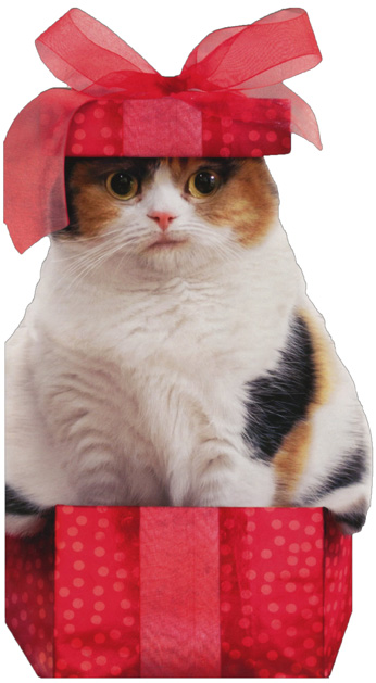 Boxed Cat Christmas Cards.Details About Cat In Small Christmas Box Little Big Funny Christmas Card By Avanti Press