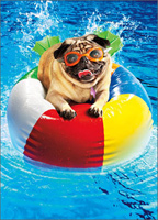 Pug On Beach Ball (1 card/1 envelope) Avanti Funny Dog Birthday Card