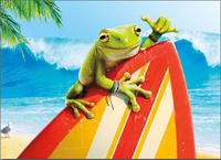Surfer Frog (1 card/1 envelope) - Birthday Card  INSIDE: Surf's up! Happy Birthday