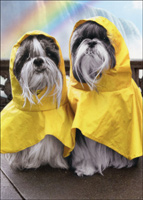 Rain Poncho Dogs At Waterfalls (1 card/1 envelope) Avanti Funny Shih Tzu Anniversary Card