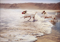 Two Dogs Running In Surf (1 card/1 envelope) Avanti Romantic Card