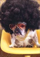 Dog With Afro (1 card/1 envelope) Avanti Funny Bulldog Get Well Card