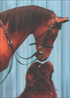 Horse Looking Over Dog's Head (1 card/1 envelope) Avanti Deluxe Matte Blank Card