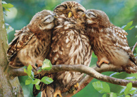 Mom And Baby Owls Giving Kisses (1 card/1 envelope) Avanti Mother's Day Card