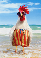 Rooster Wears Swimsuit (1 card/1 envelope) Avanti Funny Father's Day Card