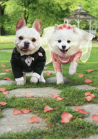 Bride And Groom Dogs Running (1 card/1 envelope) Avanti Funny Wedding Card