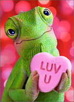 Chameleon Heart (1 card/1 envelope) - Valentine's Day Card - FRONT: LUV U  INSIDE: XOXO Happy Valentine's Day