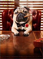 Mobster Dog (1 card/1 envelope) Avanti Funny Pug Father's Day Card
