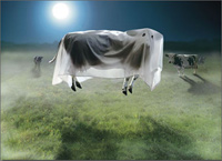 Ghost Cow Standout (1 card/1 envelope) - Halloween Card  INSIDE: HOLY SHEET! Happy Halloween