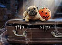 Dog On Coffin Standout (1 card/1 envelope) - Halloween Card  INSIDE: Grab the treats and GO! Happy Halloween