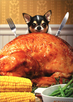 Little Dog Behind Big Turkey (1 card/1 envelope) Avanti Funny Chihuahua Thanksgiving Card
