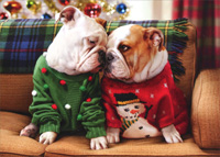 Christmas Bulldogs In Sweaters (1 card/1 envelope) Avanti Stand Out Pop Up Dog Christmas Card
