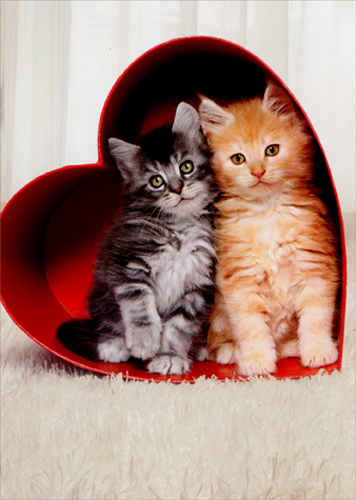 For Valentine S Day Cat Toys : Two kittens in heart box cat valentines day card