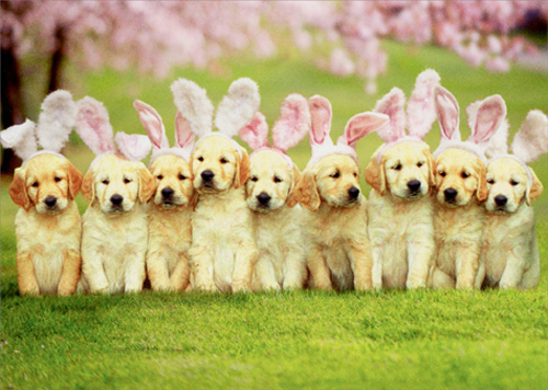 Row Of Puppy Bunnies Dog Easter Card Greeting Card By Avanti Press