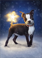 Dog With Star Topper Tail (1 card/1 envelope) - Christmas Card  INSIDE: May your Christmas be merry and bright!