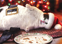 Santa Cat With Cookies Christmas Card