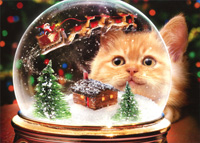 Kitten Snow Globe (1 card/1 envelope) Avanti Cat Christmas Card