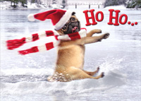 Pug Slides Across Frozen Pond (1 card/1 envelope) Avanti Funny Dog Christmas Card