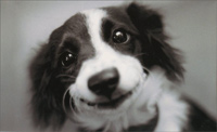 B&W Dog Face (1 mini blank card/1 envelope) - Gift Enclosure Card