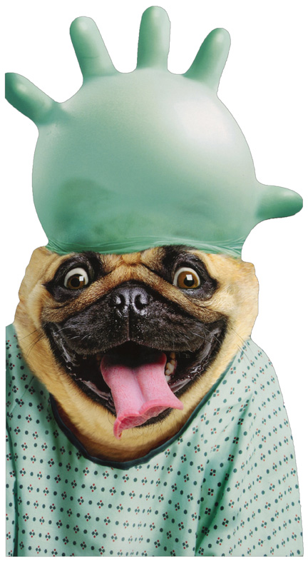 Well-known Dog With Surgical Glove Oversized Funny Pug Get Well Card by  SX22