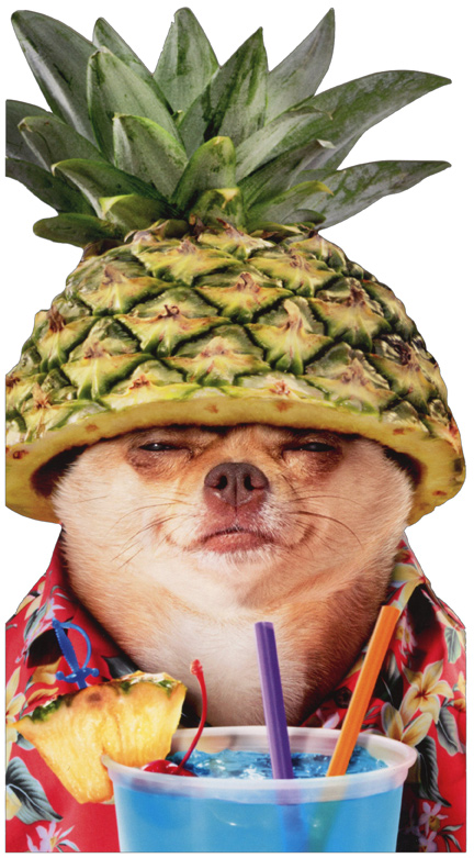 Pineapple Poolside Chihuahua Oversized Funny Dog Masculine Birthday