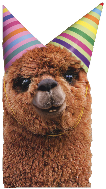 Llama Birthday Cake Greeting Cards Shipped Using USPS First Class Package Are Normally In A White Or Kraft Non