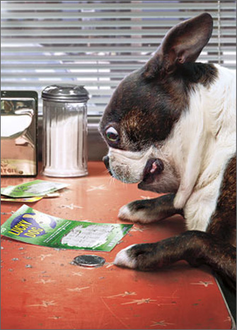 Dog Lottery Tickets (1 card/1 envelope) Avanti Boston Terrier Stand Out Pop Up Birthday Card  INSIDE: Looks like we have a winner! Happy Birthday